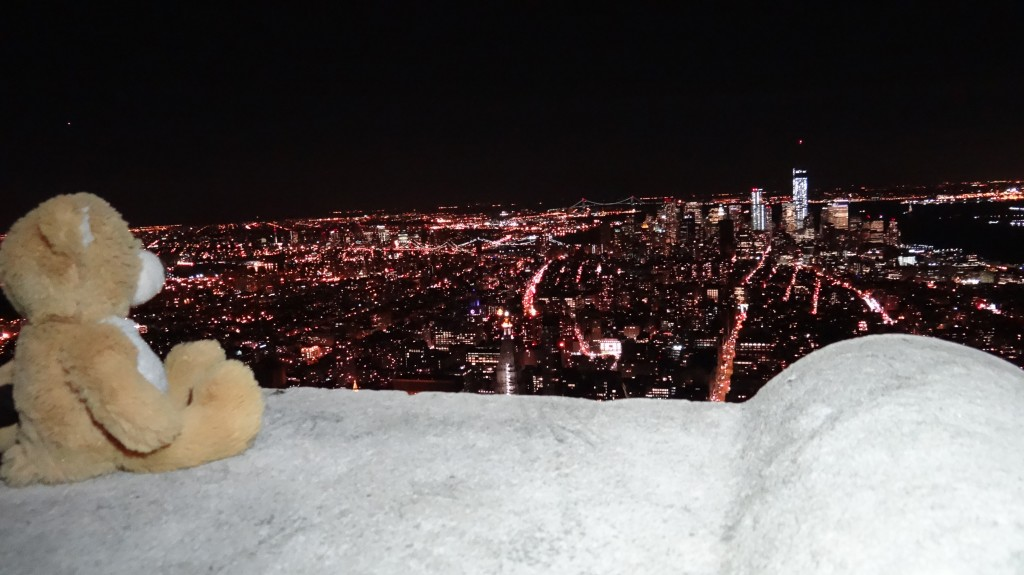 Teddy on Empire State Building
