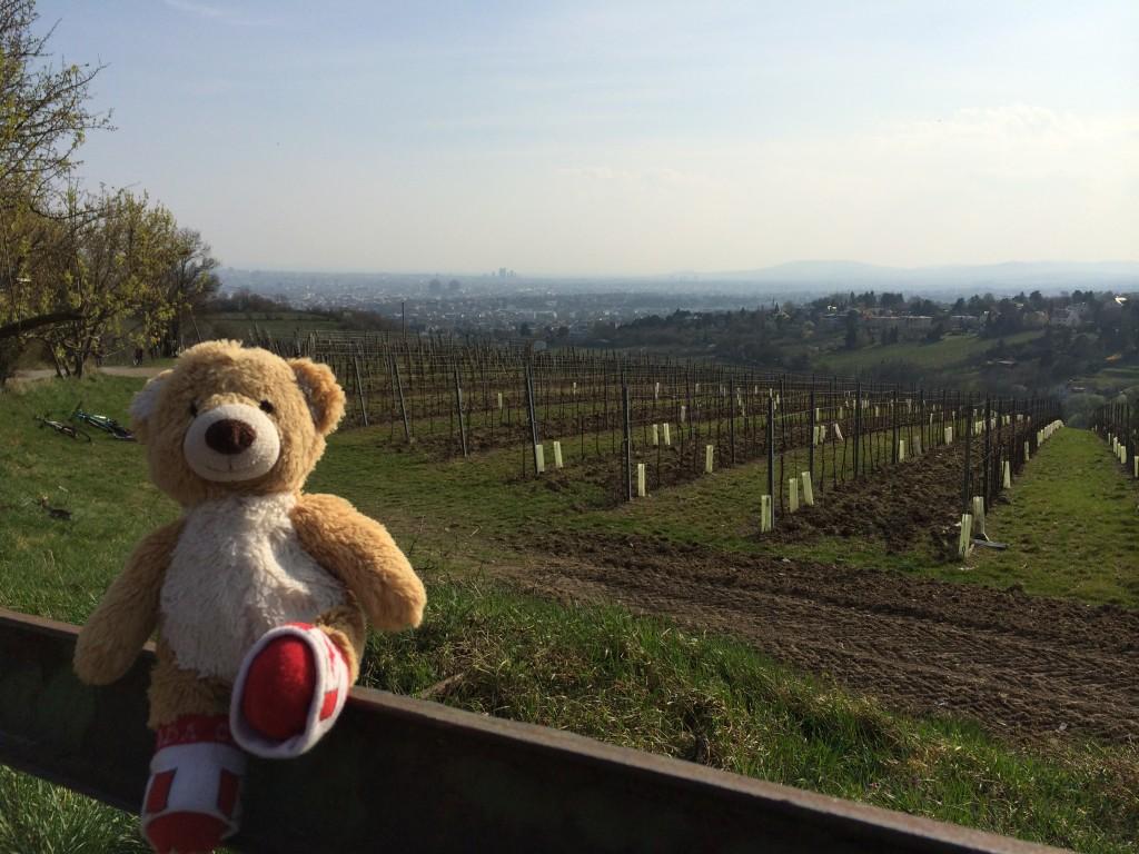 Teddy Vienna View